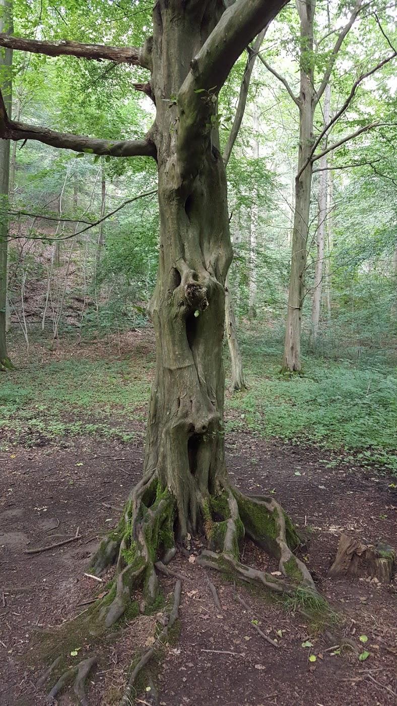 Quelle dryade s'est faite coincée dans cette arbre? En tout cas son histoire devait être triste et torturée