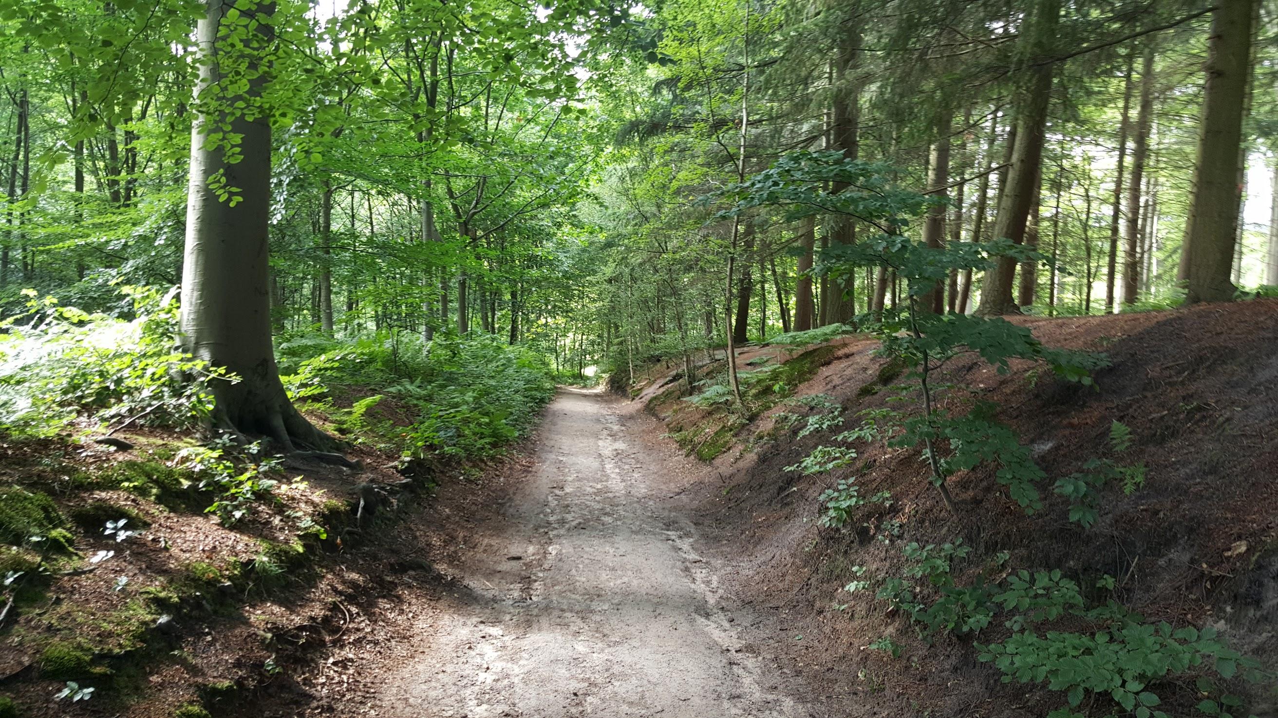 Entrez dans le bois. Ecoutez les histoires que la nature vous murmure a l'oreille...